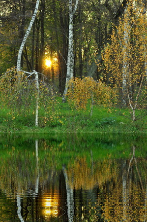 deciduous woodland: birch trees reflected in water