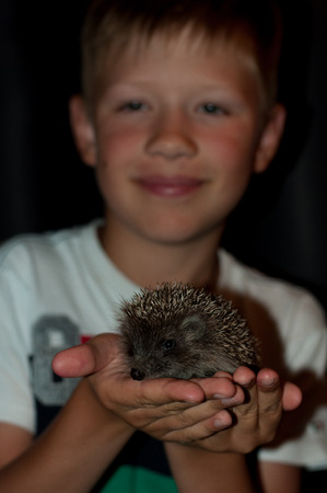 spiked hair: boy with a hedgehog on hands in the evening Stock Photo