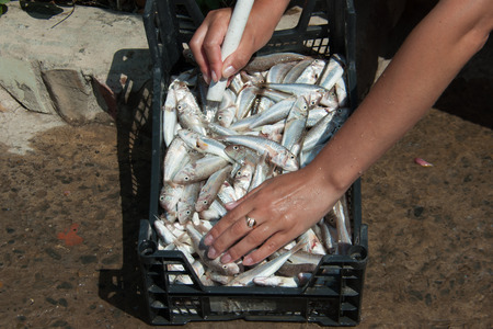 mullet: Womens hands wash the fish red mullet bright summer day