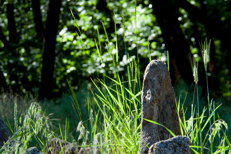 Stones of the largest sanctuary on the background of the grass of the island of Khortytsya