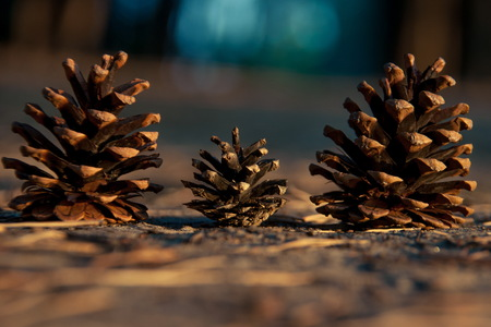 Three pine cones close-up on the ground in a row