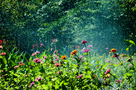 Artificial watering of flowers on a sunny summer day Stock Photo