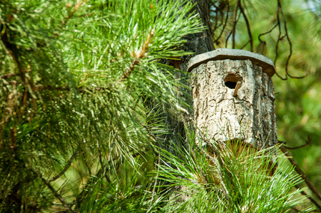 a birdhouse on a pine in a bright summer day Stock Photo