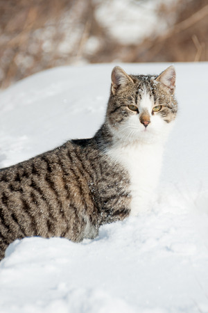 a homeless cat sits in the snow with a frosty day
