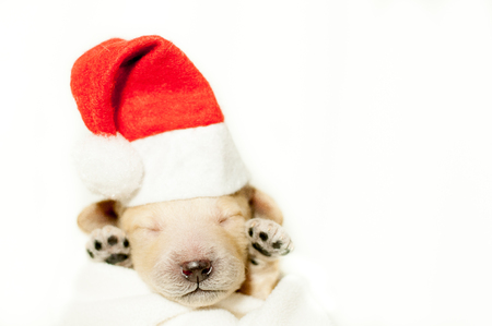 Newborn puppy in a red hat and in a red cape on a white background Stock Photo