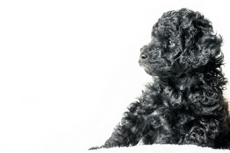 black puppy is lying on a white blanket on a white background