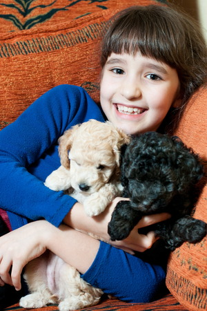 girl with two dogs of breed poodle indoors Stock Photo