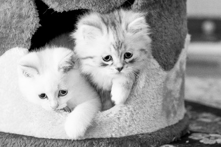 two kittens are looking out of their house Stock Photo