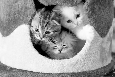 three kittens are looking out of their house Stock Photo