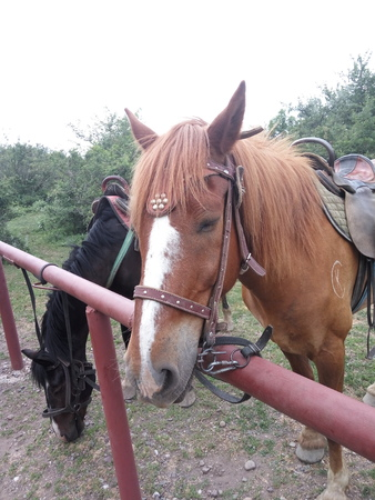 two horses are black and brown are standing side by side