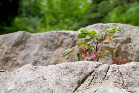 the plant grows in the stones on a bright summer day