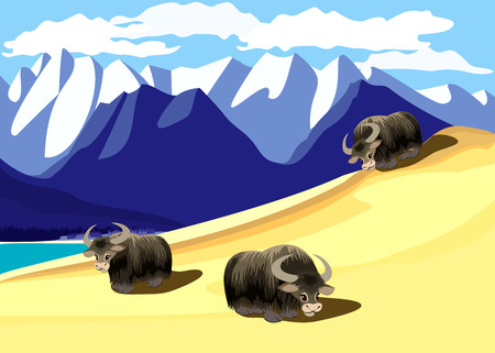 Bulls feed in the mountains  Stock Vector - 6386927