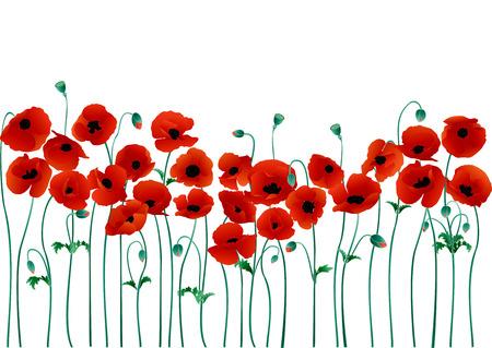 Poppies Stock Vector - 6386936