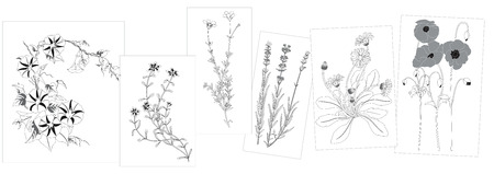Sketches of wild flowers Vector