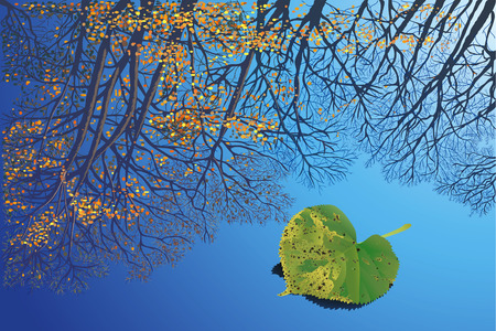 puddles: Reflection of trees against a background sky in a pool Illustration