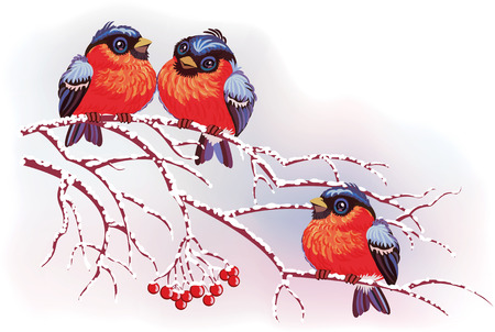 wildlife design: Cute bullfinches on branches on a winter background