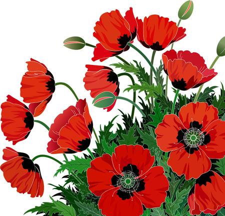 poppy field: Ilustraci�n de amapolas rojas