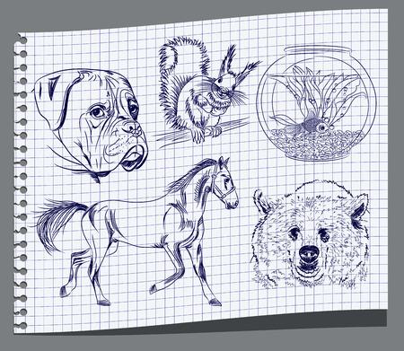 garanhão: Desenho de animais