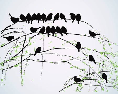 birds in a tree: Silhouettes of birds sitting on branches