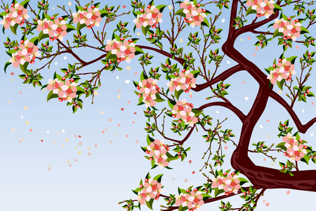 Vector illustration of  blooming apple tree Vector