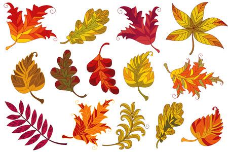 casta�as: Colecci�n de vector de hojas de oto�ales