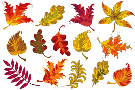 chestnut tree: Vector collection of autumn leaves Illustration