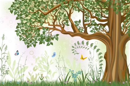 bark: Vector iillustration of an oak tree in a meadow