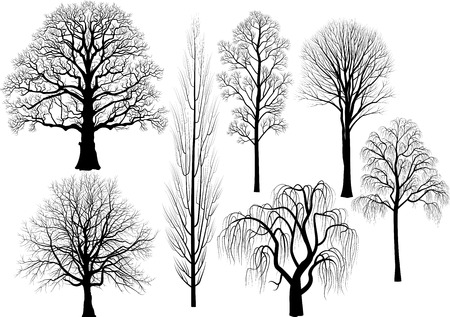 willow: Vector collection of trees in black Illustration