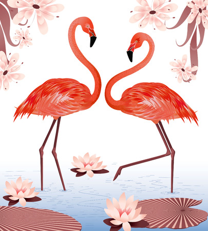 water birds: a couple of flamingos Illustration