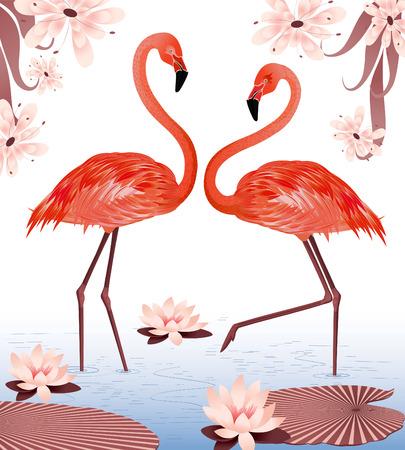 flamenco ave: un par de flamencos