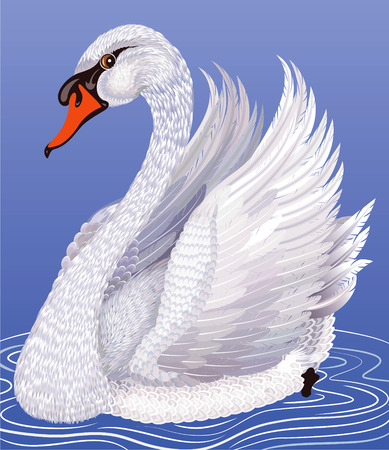 swimming bird: un cisne blanco Vectores