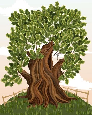 foglie di quercia: Albero di quercia