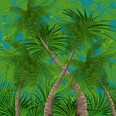 foliage frond: Background with tropical plants and trees