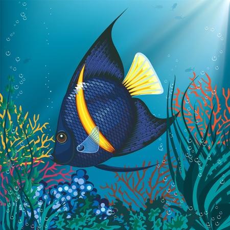 peces de agua salada: Ilustraci�n de un pez tropical nadando bajo el agua