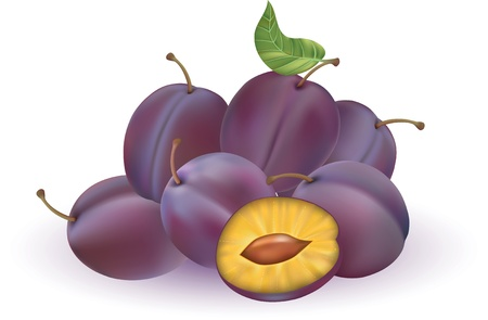 illustration of plums isolated on the white background