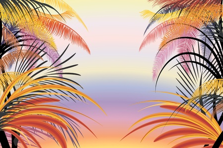 frond: Background with silhouettes of tropical plants