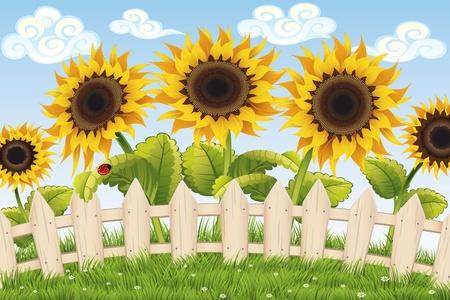 sunflower seed: Sunflowers