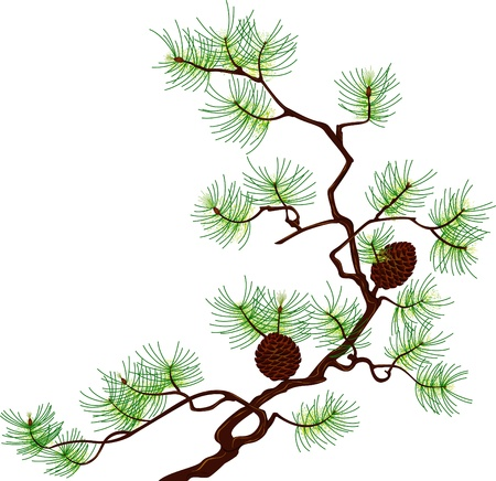 Pine branch isolated on white background Illustration