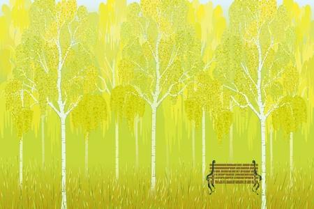 작은 숲: 공원에서 자작 나무 나무의 배경에 벤치