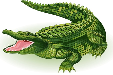Vector illustration of a crocodile on white background