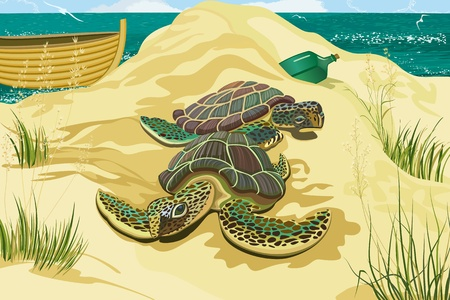 Sea turtles on the beach Vector