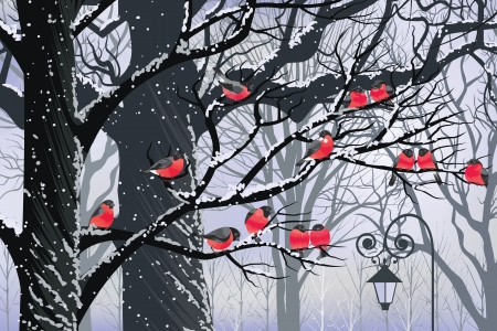 Bullfinches on trees in winter city Vector