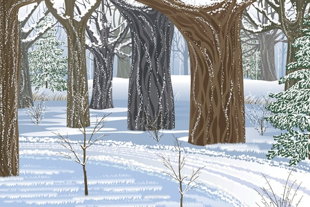 enchanted forest: Illustration of dream winter forest Illustration
