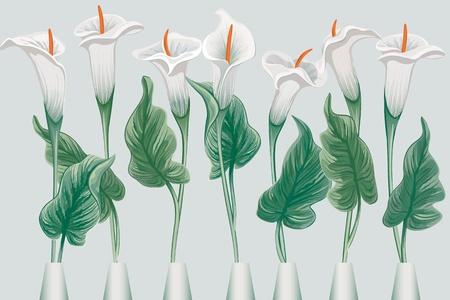 calla lily: Group of callas over blue background