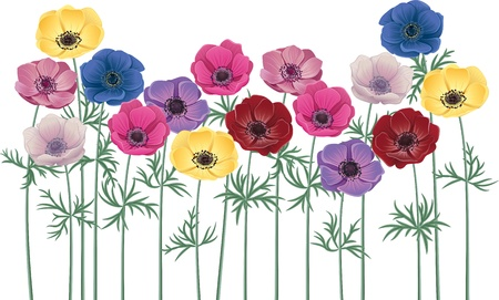 Anemones - group of flowers isolated over white background
