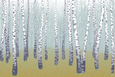 Birch wood Vector