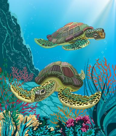 Illustration of two sea turtles swimming underwater Illustration