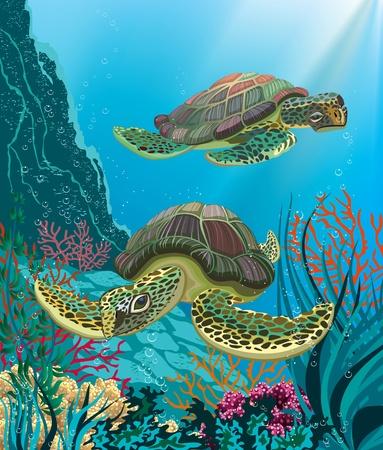 green turtle: Illustrazione di due tartarughe marine nuoto subacqueo