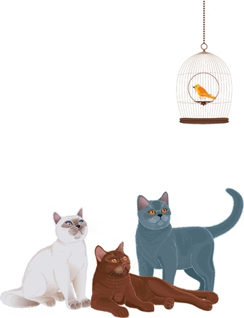 Groep katten te kijken naar de vogelkooi op een witte achtergrond Elke kat is gegroepeerd