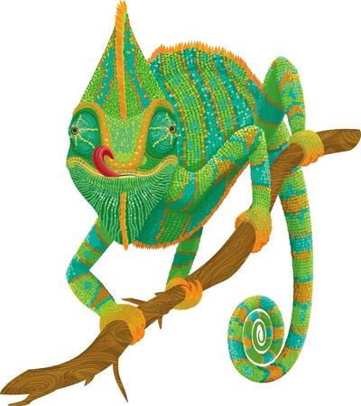 Vector ilustración de un camaleón que sube en una rama aislada sobre fondo blanco